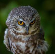 <!--BD-->Owl