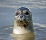 <!--SE-->Seal