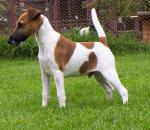 <!--DG-->Terrier Dogs