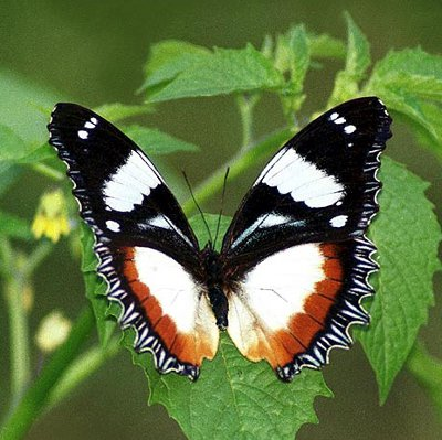 Image result for White Butterflies Meaning