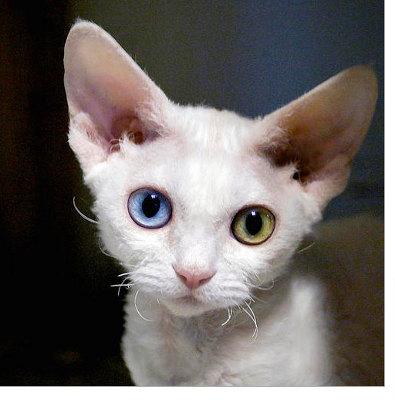kittens diseases