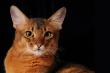 Somail Cat