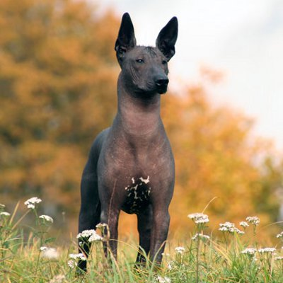 Facts about Xoloitzcui...