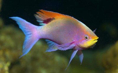 rainbow fish knowledge base lookseek com