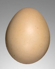 red-golden-pheasant-egg.jpg